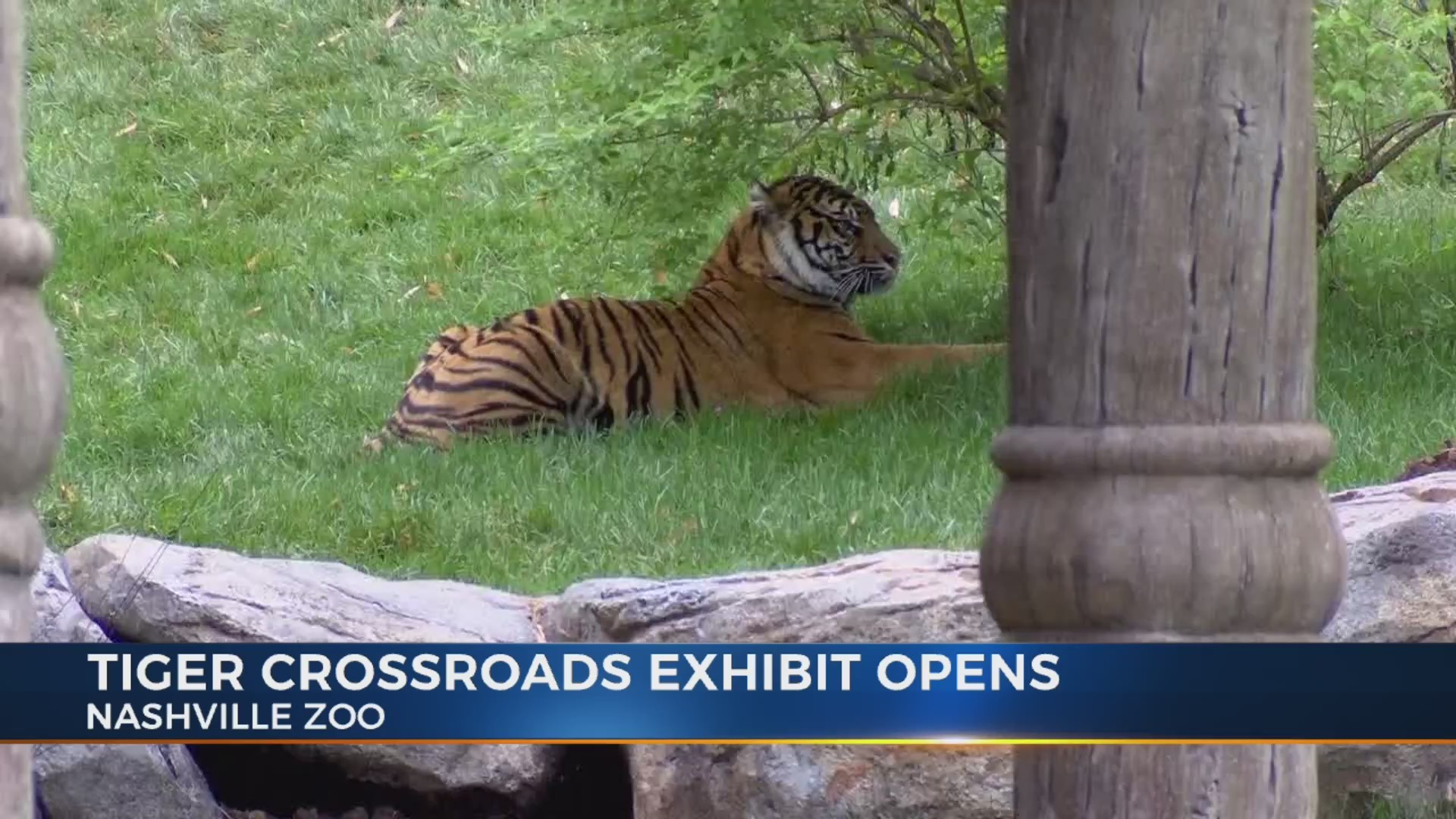 Nashville Zoo unveils new tiger exhibit