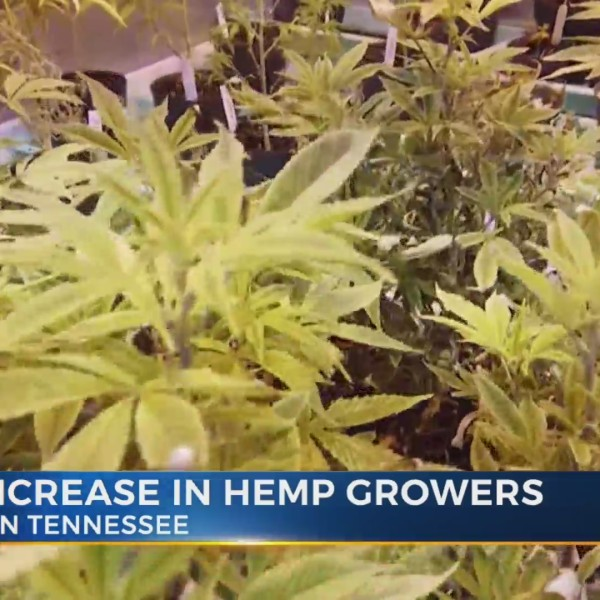 Number_of_licensed_hemp_growers_increase_9_20190412213544