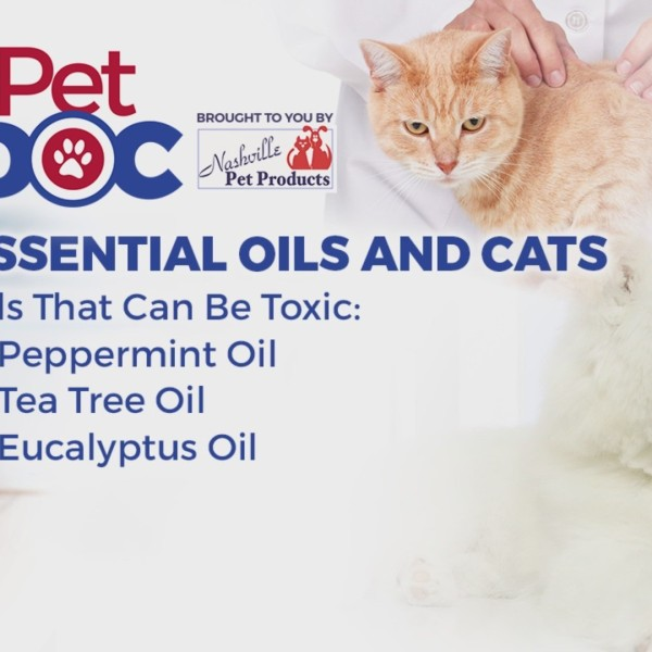 Pet_Doc_with_Nikki_Burdine__Essential_oi_0_20190414122158