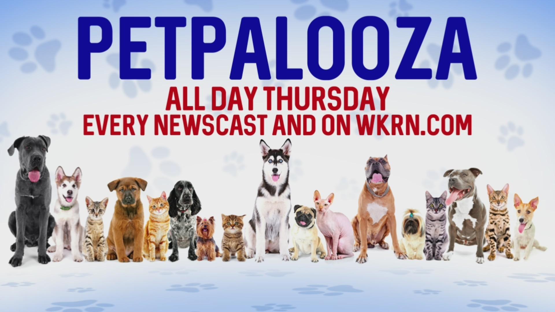 Petpalooza continues at Metro shelter