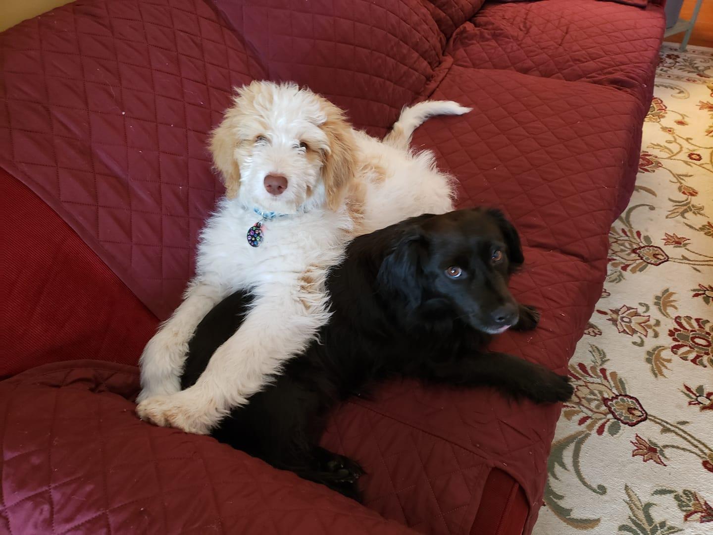 Vinny and Joey_1555024641270.jpg.jpg