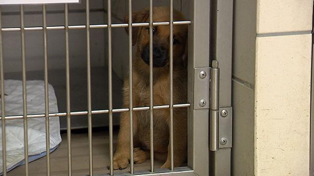 Pet Adoption Dog Generic_215407