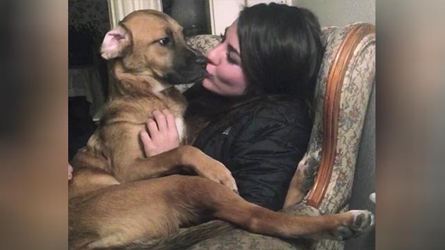 Maine dog custody