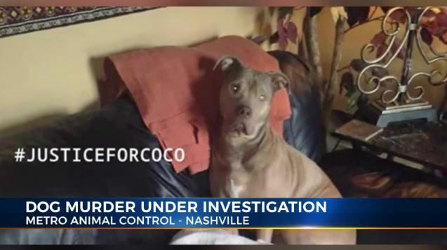 Coco investigation_1557943455691.JPG.jpg