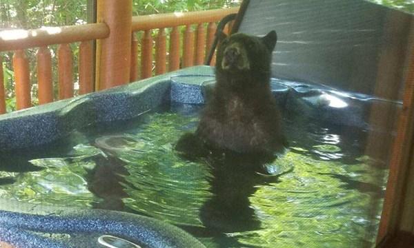 bear hot tub 1_1556908242550.jpg.jpg