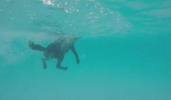 swimming_1558168689107.JPG
