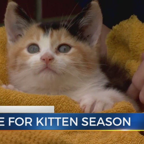 Pet Doc: What to do when you see tiny kittens