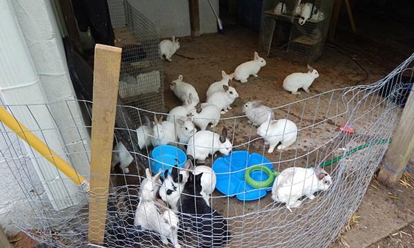 bunnies web_1560828017226.jpg.jpg