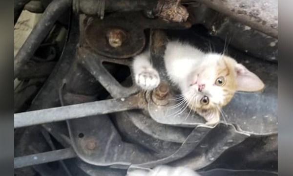 Kentucky kitten ride