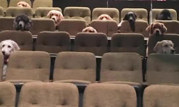 dog theater training