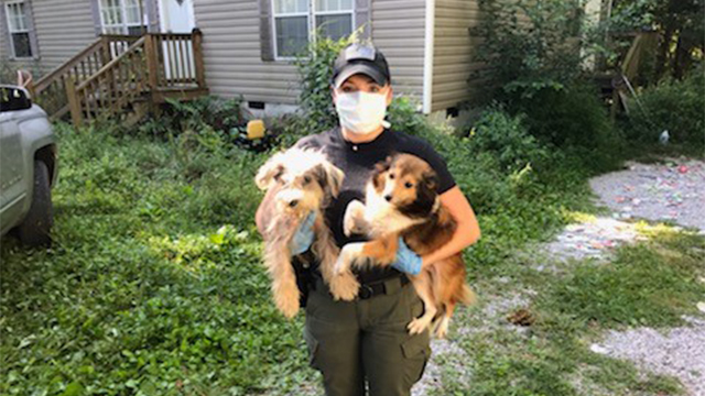 Bledsoe County animal rescue