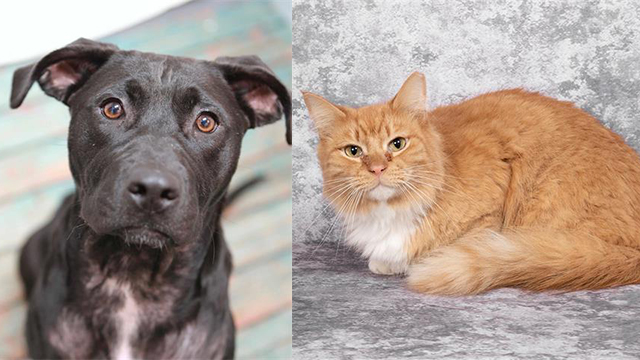Pets of the Week for Sept. 17, 2019