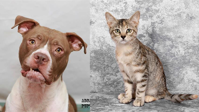 Pets of the Week for Sept. 25, 2019