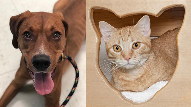 Pets of the Week for Oct. 15, 2019