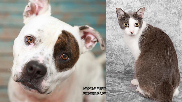 Pets of the Week for Oct. 8, 2019