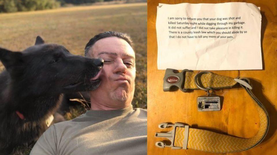 dog killed