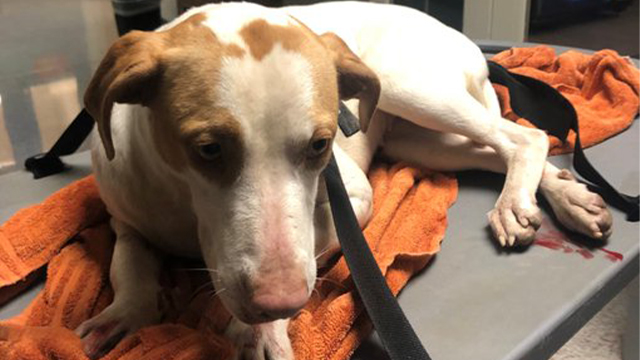 Knoxville dog thrown from overpass