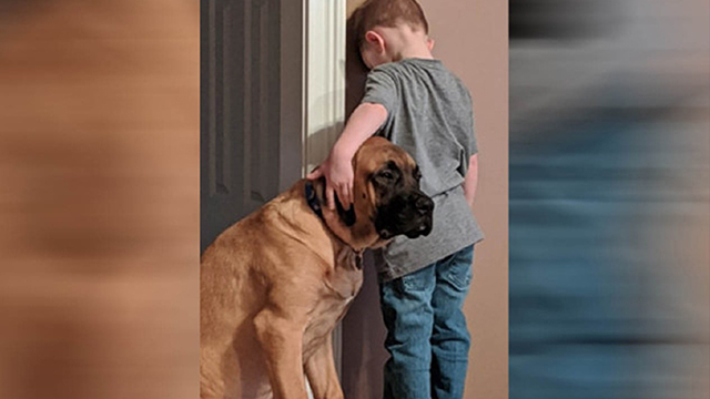 Dog joins boy in timeout