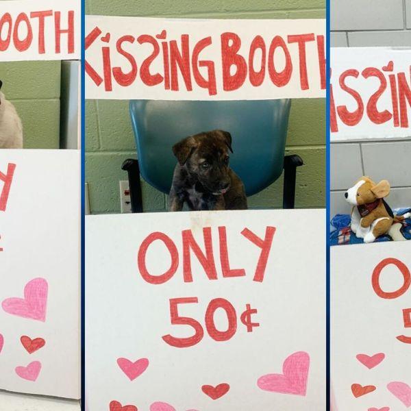 Pet Adoption for Valentine's Day