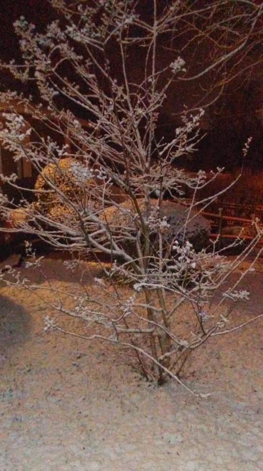 Antioch snow (Courtesy: Ellen Ford)