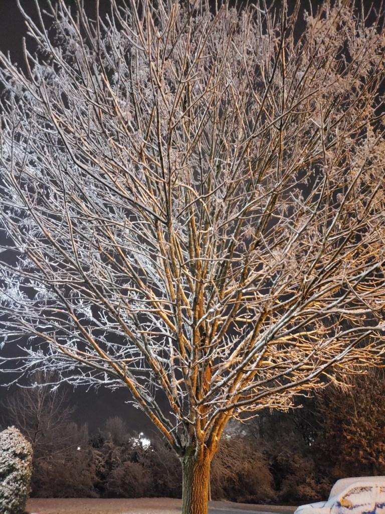Murfreesboro snow tree (Courtesy: Jessica Best)