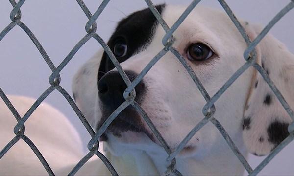 Cheatham County shelter dog generic