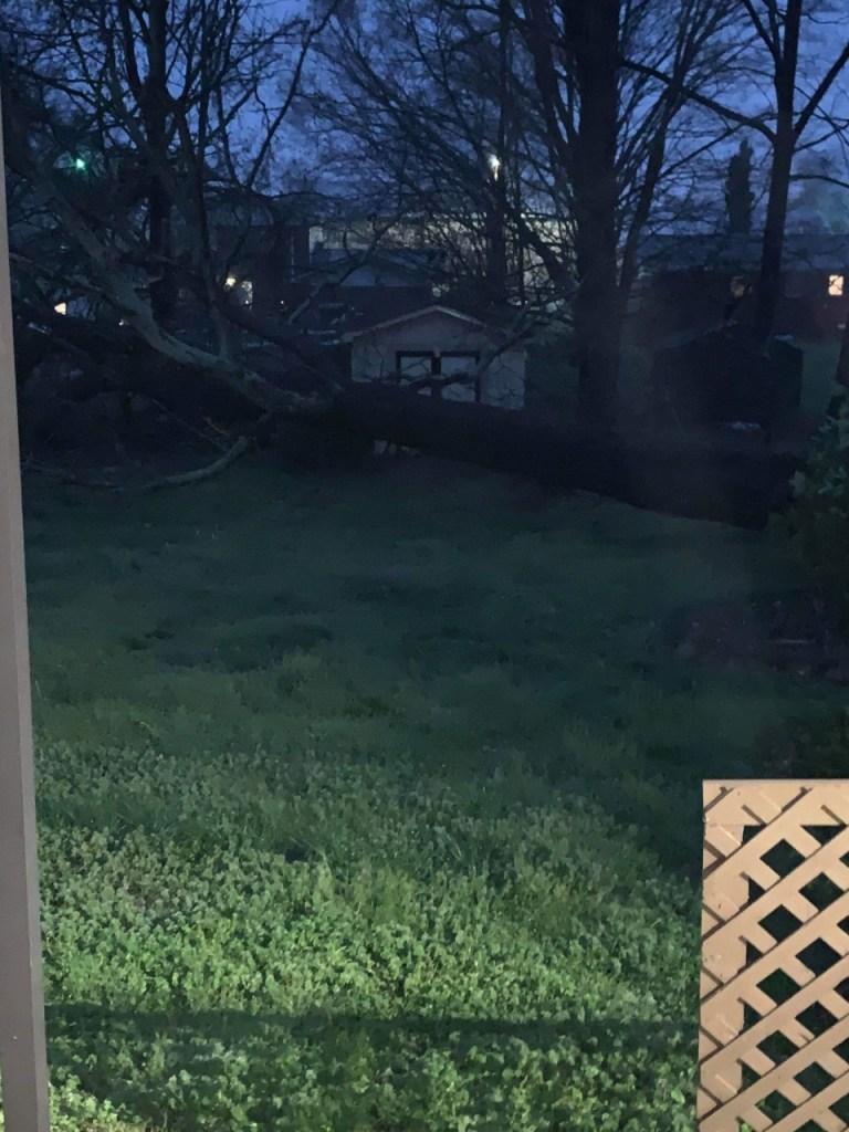 kourtneylepard-treedownindecherd