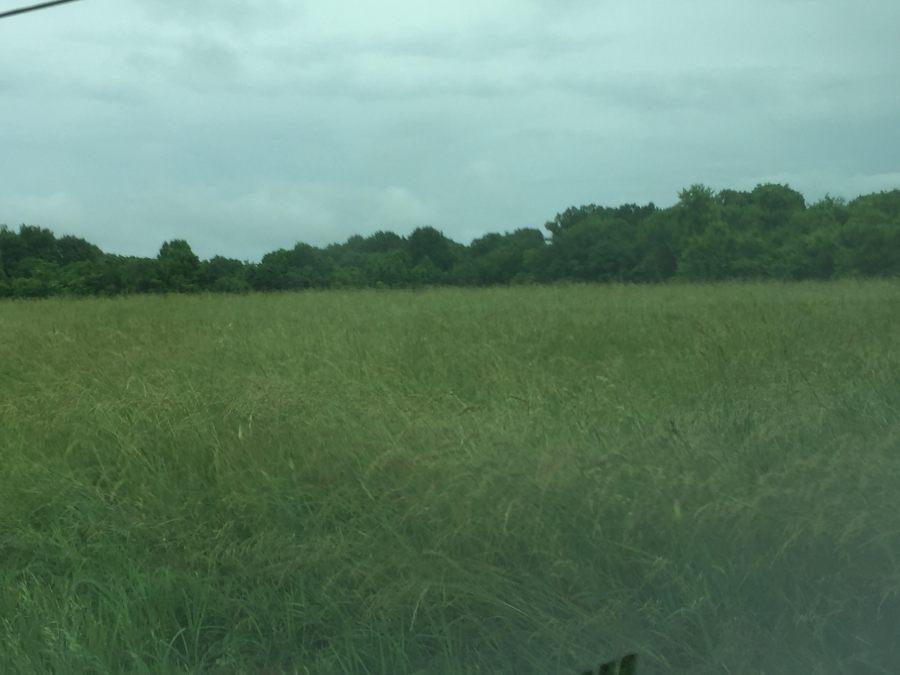 Wet Hay field in Wilson County