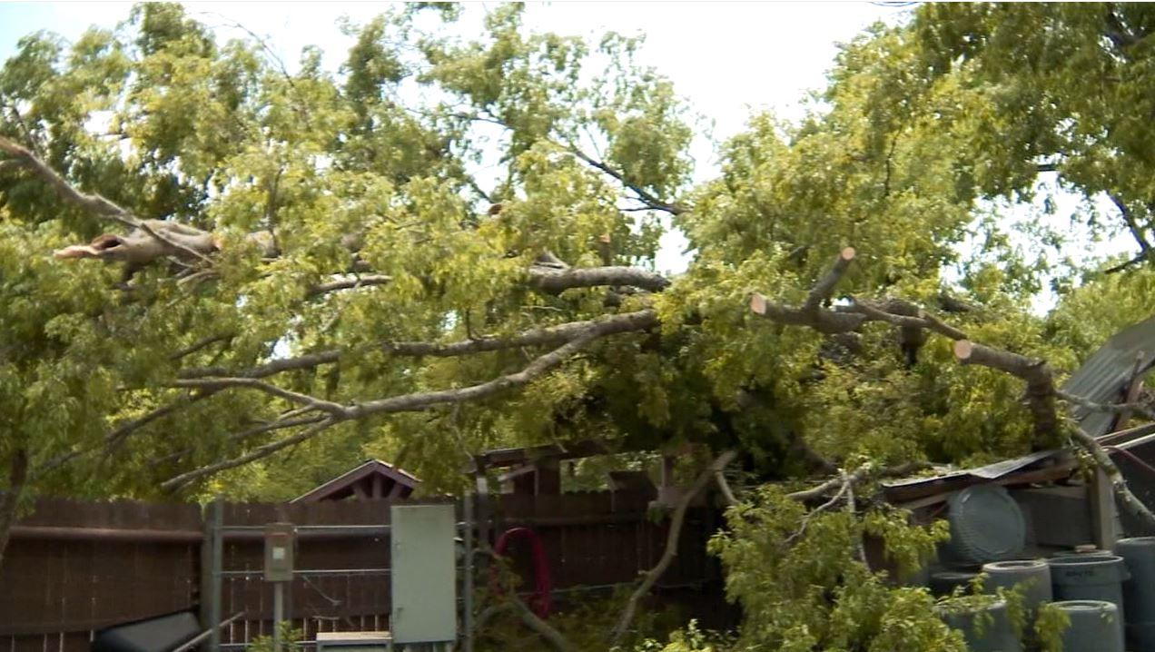 Nashville Zoo storm damage