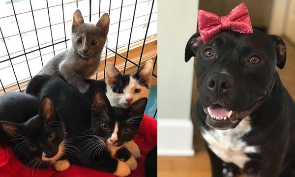 Kittens and Lorelei