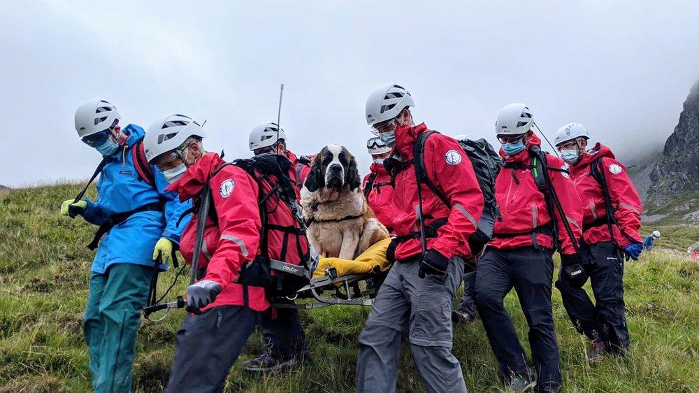 St. Bernard rescue