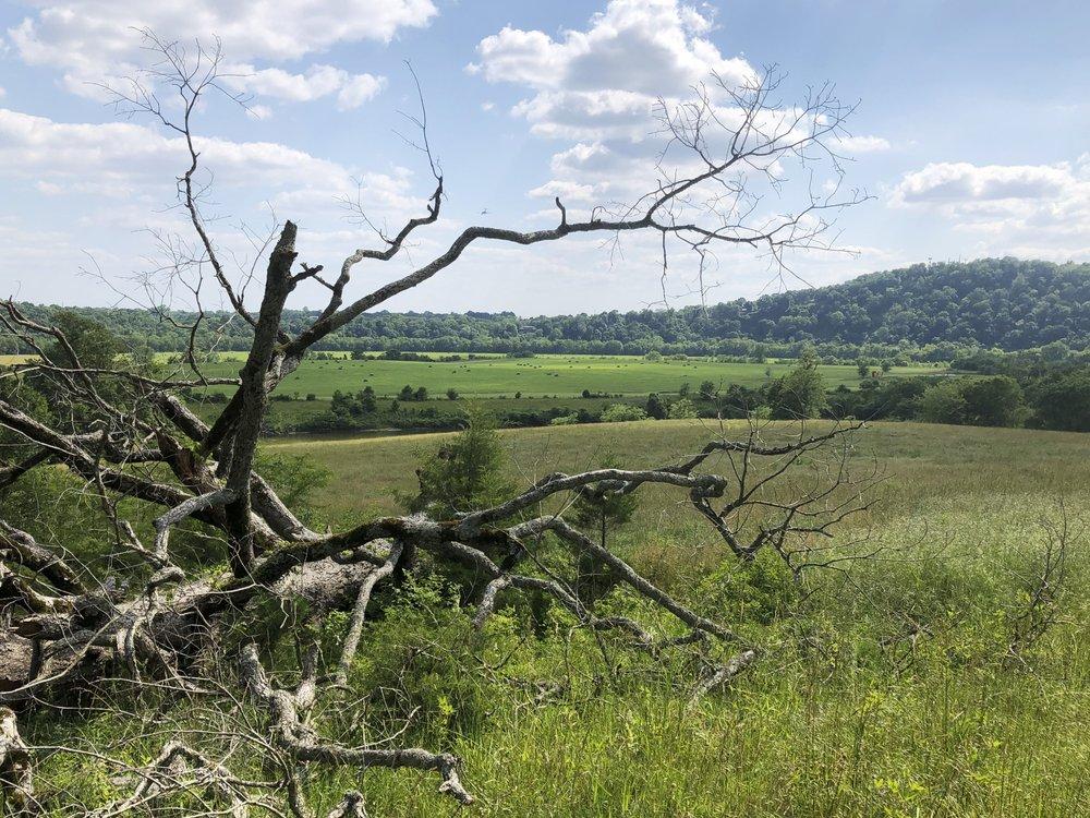 Stones River grassland