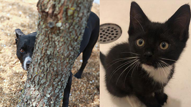 Pets of the Week for Sept. 22, 2020