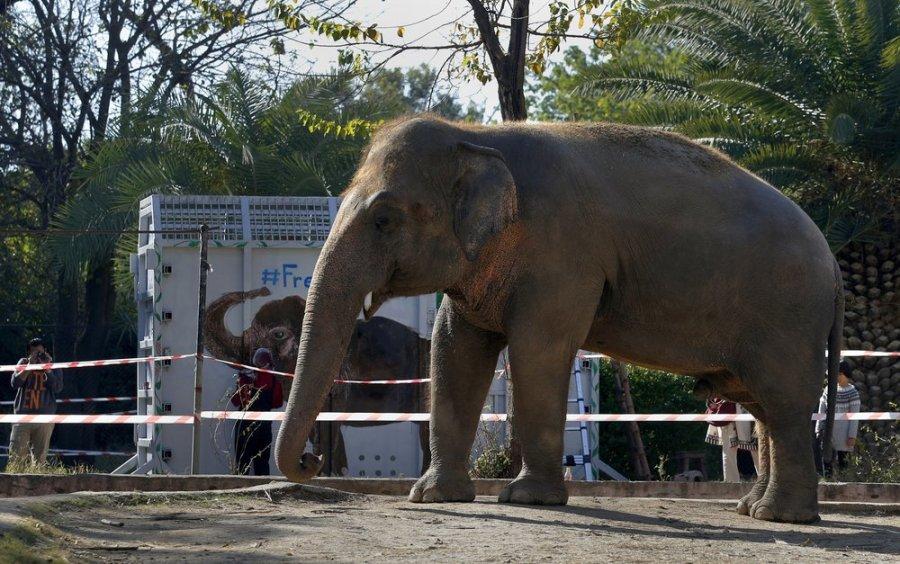 Pakistan elephant