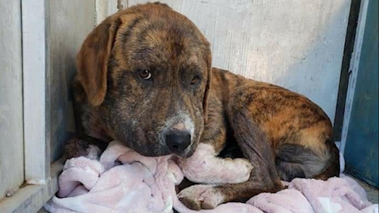 Hardin County dog abused