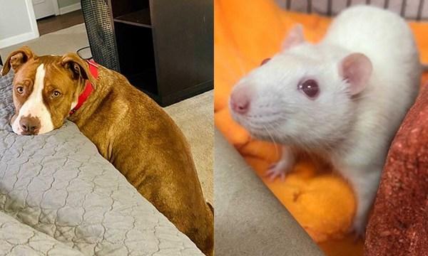 Rat and Darla