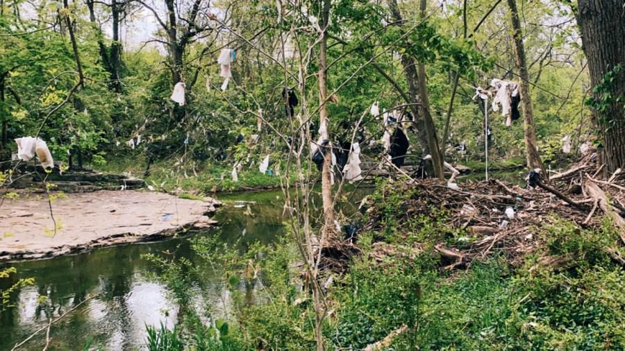 Debris at Whitsett Park