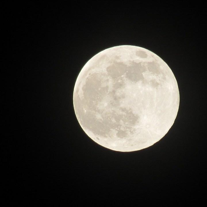 pink moon Gladeville katie pinhal