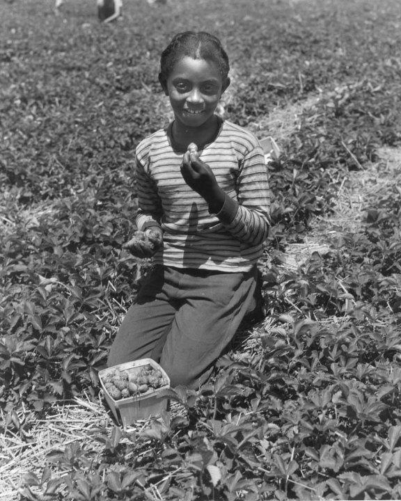 Portland-Strawberries