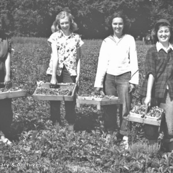 Strawberry Picking at Portland, Tenn., May 23, 1950