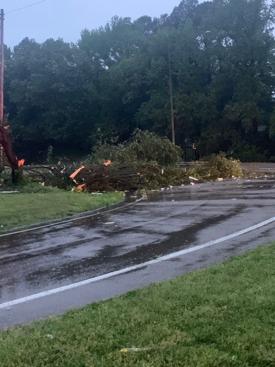 Paris / Henry County (Courtesy: Police Police Department)