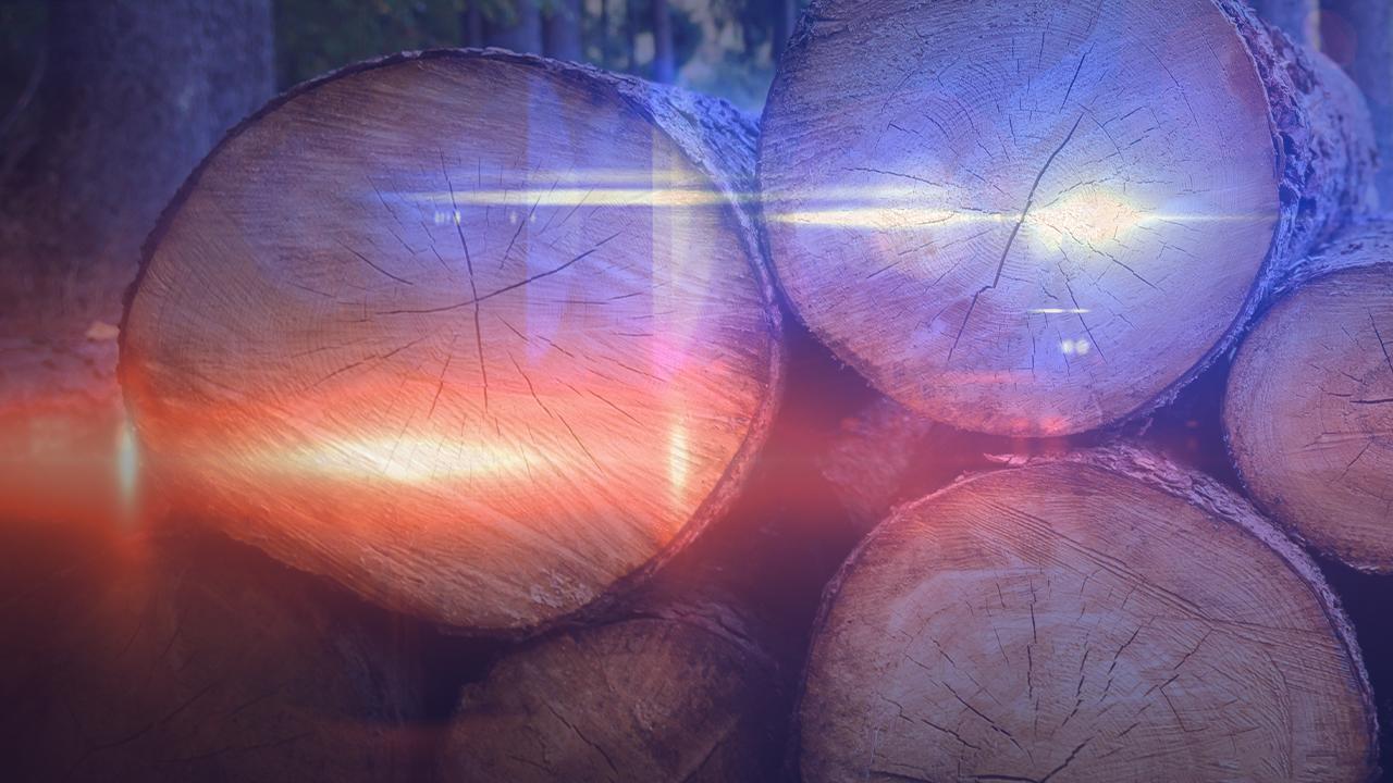 Timber Theft