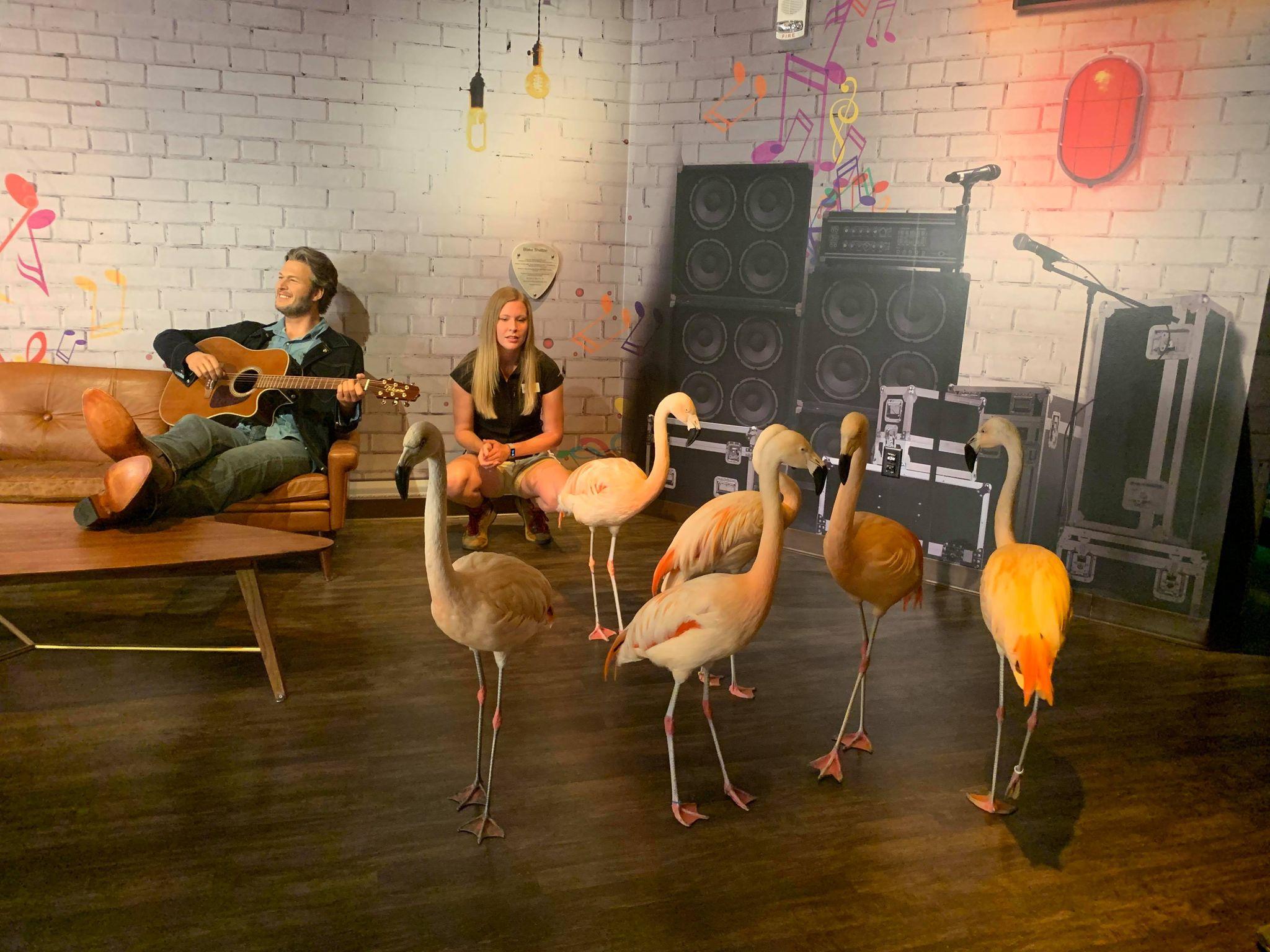 Flamingos visit Wax Museum in Nashville, WKRN photo