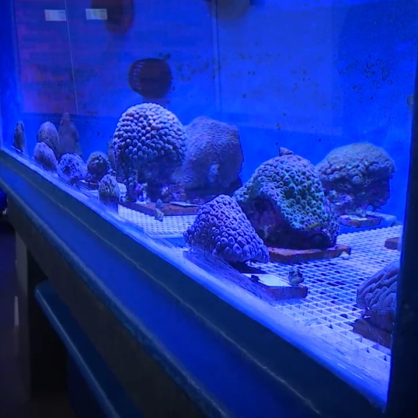 Coral Conservation Lab