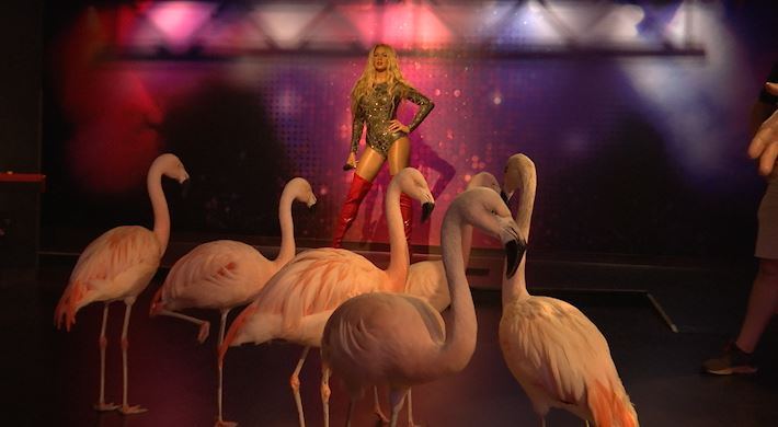 Flamingos visit Wax Museum in Nashville