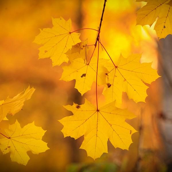 Fall leaves generic