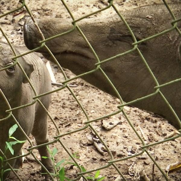 Garland and Tinsel Nashville Zoo