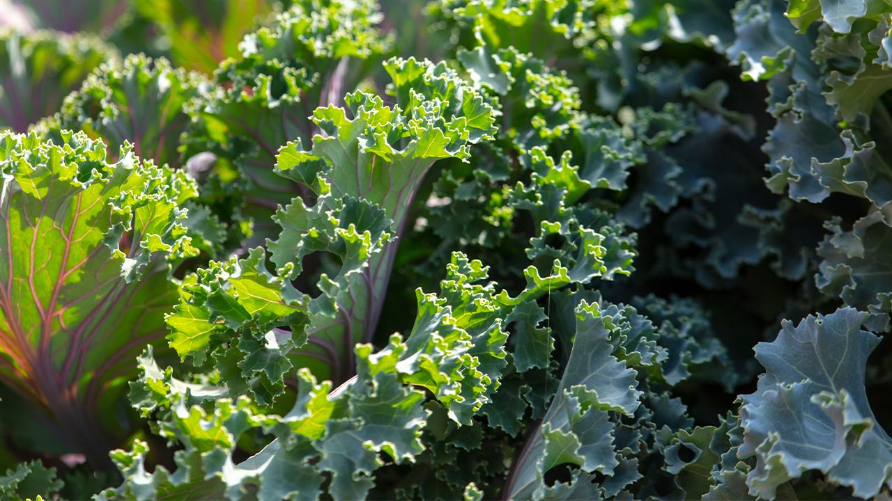 Kale Generic