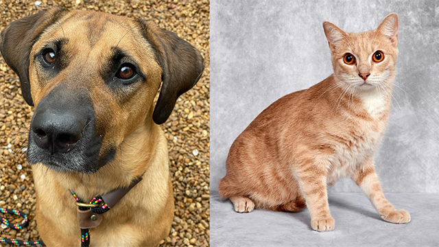 Pets of the Week for Sept. 22, 2021